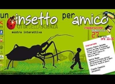 insetti imm