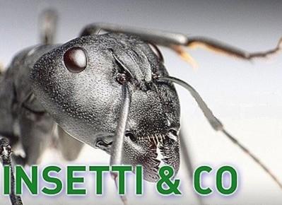 Insetti & Co.