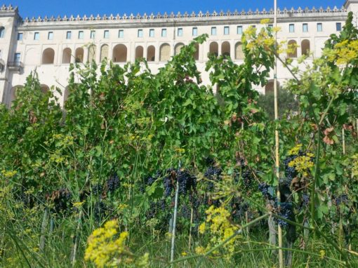 Festival delle Vigne Metropolitane
